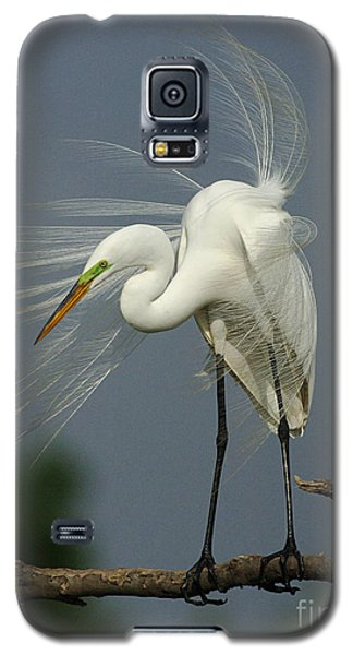 Great Egret Galaxy S5 Case by Bob Christopher