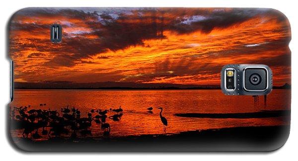 Great Heron Sunset Galaxy S5 Case