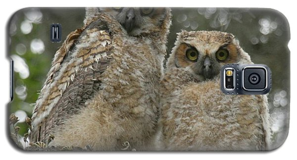 Galaxy S5 Case featuring the photograph Great Horned Owl Babies by Myrna Bradshaw