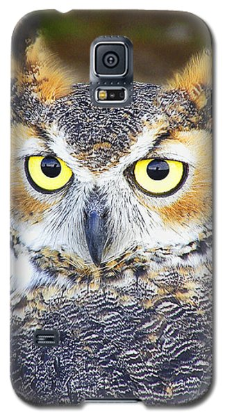 Great Horned Owl Galaxy S5 Case by Barbara Middleton