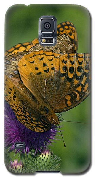 Great Spangled Fritillaries On Thistle Din108 Galaxy S5 Case