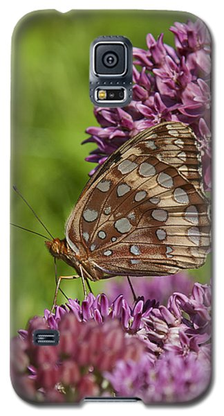 Great Spangled Fritillary Din194 Galaxy S5 Case