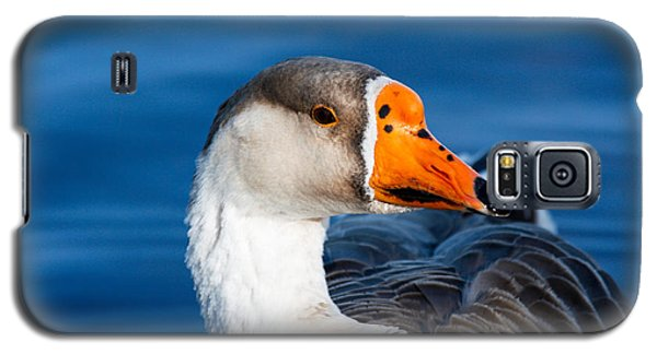 Greater White Frontal-goose Striking A Pose Galaxy S5 Case by Ann Murphy