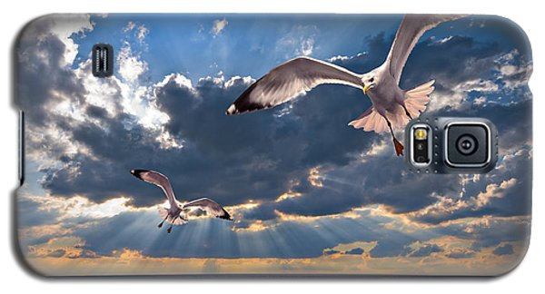 Greek Gulls With Sunbeams Galaxy S5 Case