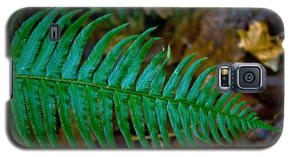 Galaxy S5 Case featuring the photograph Green Fern by Tikvah's Hope