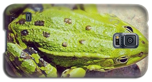 Green Frog Sitting On Stone Galaxy S5 Case by Matthias Hauser