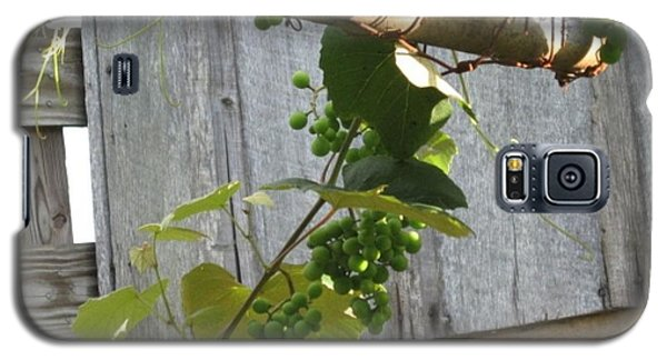 Green Grapes On Rusted Arbor Galaxy S5 Case