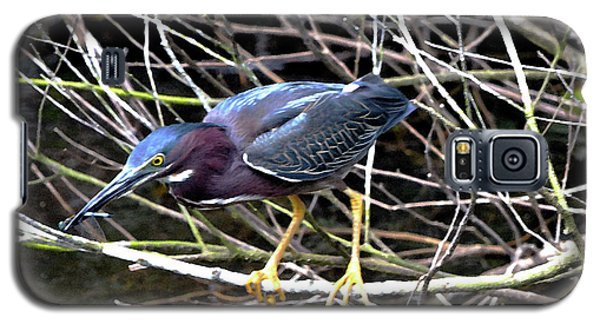 Galaxy S5 Case featuring the photograph Green Heron by Pravine Chester