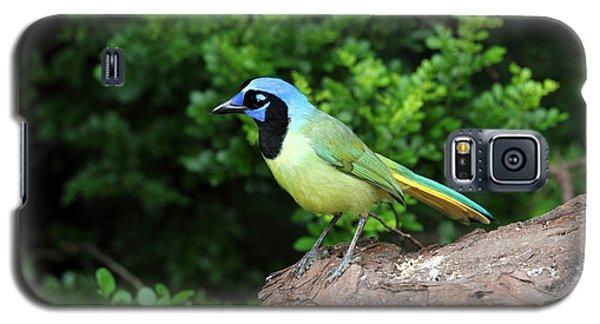 Green Jay Galaxy S5 Case