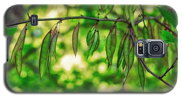 Green Redbud Seed Pods Galaxy S5 Case