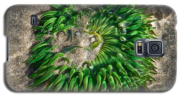 Green Sea Anemone Galaxy S5 Case
