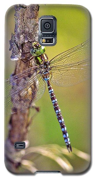 Green-striped Darner Dragonfly Galaxy S5 Case