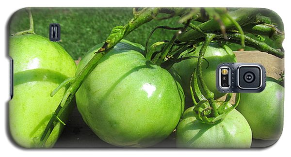Galaxy S5 Case featuring the photograph Green Tomatoes 2 by Tina M Wenger