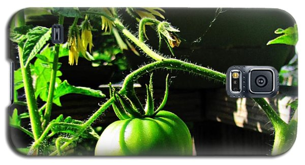 Green Tomatoes Galaxy S5 Case