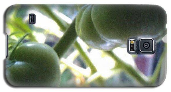 Food And Beverage Galaxy S5 Case - Green #tomatoes #instaprints by Abbie Shores