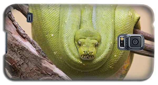 Green Tree Python Galaxy S5 Case by Suzanne Gaff