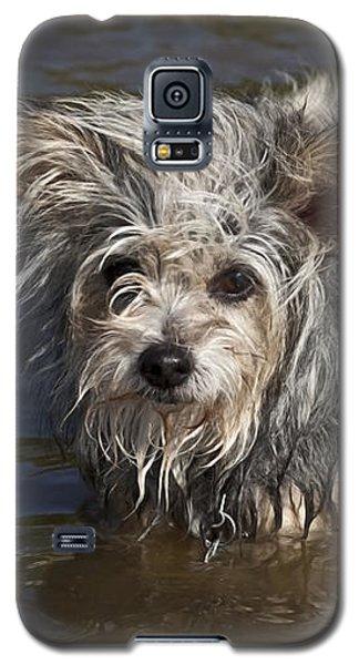 Gremlin Galaxy S5 Case