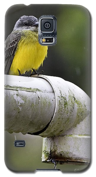 Grey-capped Flycatcher Galaxy S5 Case by Heiko Koehrer-Wagner
