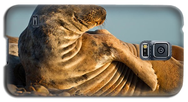 Grey Seal Halichoerus Grypus Watching Galaxy S5 Case