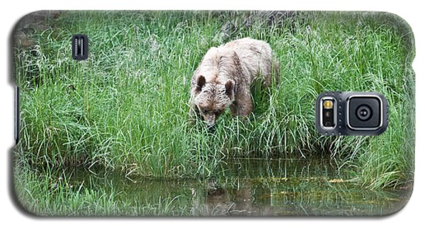 Grizzly Bear And Reflection On Prince Rupert Island Canada 2209 Galaxy S5 Case by Michael Bessler