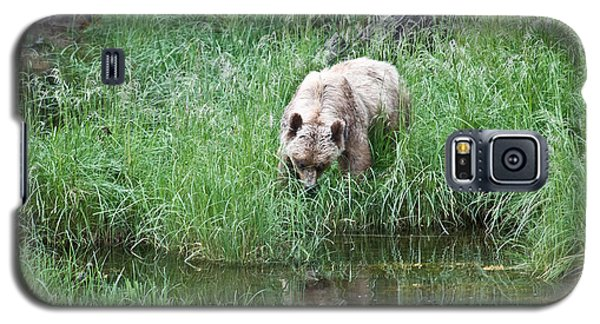 Grizzly Bear And Reflection On Prince Rupert Island Canada 2209 Galaxy S5 Case