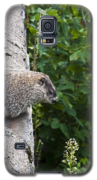 Groundhog Day Galaxy S5 Case by Bill Cannon