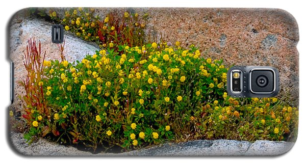 Growing In The Cracks Galaxy S5 Case by Brent L Ander