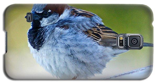 Guard Bird Galaxy S5 Case