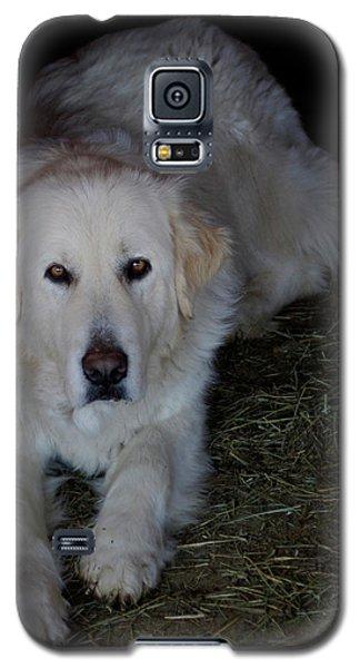 Guarding The Barn Galaxy S5 Case