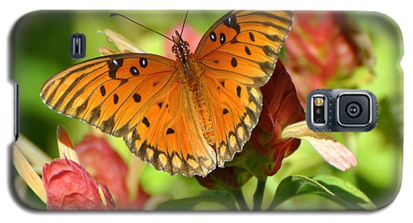 Gulf Fritillary Butterfly On Flower Galaxy S5 Case by Jodi Terracina