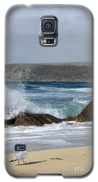 Gull On The Sand Galaxy S5 Case by Linsey Williams