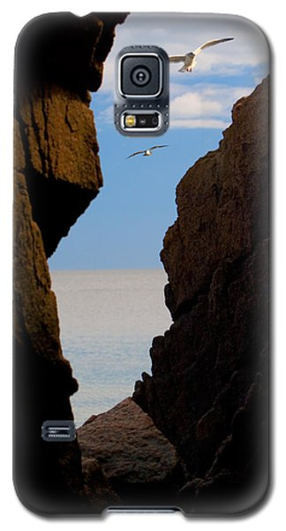 Gulls Of Acadia Galaxy S5 Case by Brent L Ander