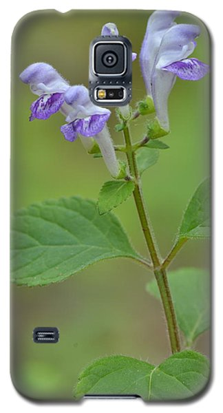 Galaxy S5 Case featuring the photograph Hairy Skullcap by JD Grimes