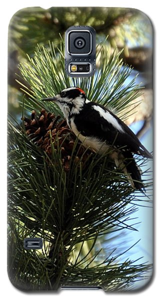 Hairy Woodpecker On Pine Cone Galaxy S5 Case