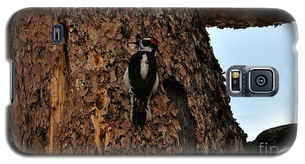 Hairy Woodpecker On Pine Tree Galaxy S5 Case