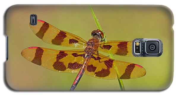 Halloween Pennant Galaxy S5 Case