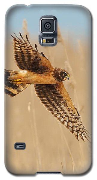 Harrier Over Golden Grass Galaxy S5 Case