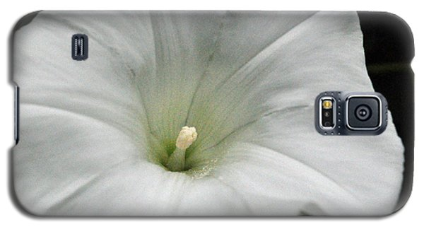 Galaxy S5 Case featuring the photograph Hedge Morning Glory by Tikvah's Hope
