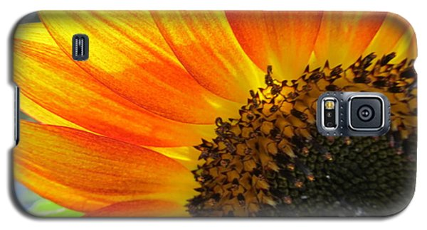 Galaxy S5 Case featuring the photograph Hello Sunflower by Tina M Wenger