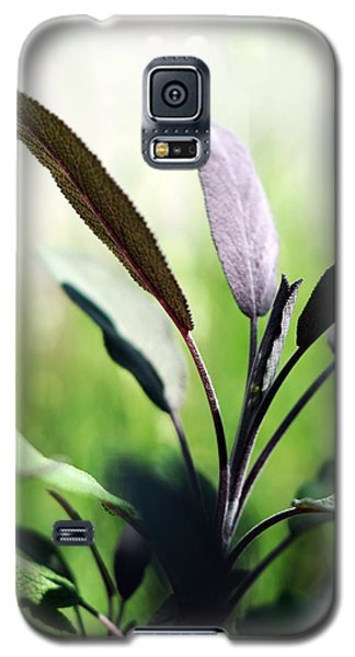 Herb Garden Purple Sage Galaxy S5 Case