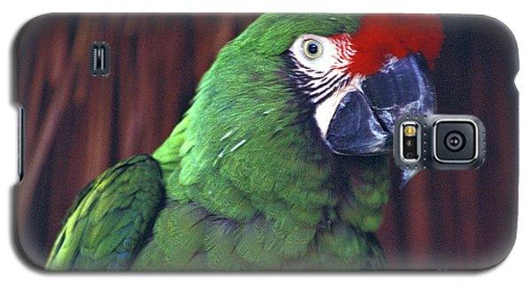 Galaxy S5 Case featuring the photograph Here's Looking At You Military Macaw Riviera Maya Mexico by John  Mitchell
