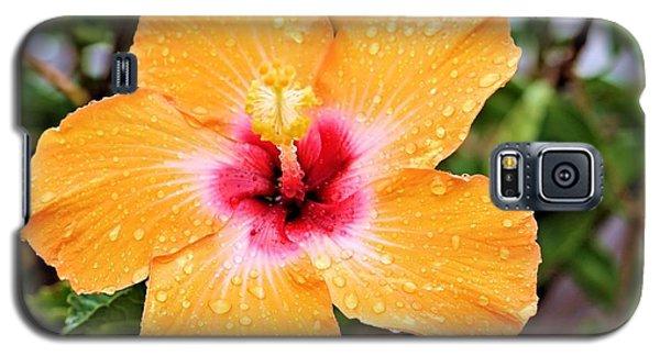 Hibiscus Beauty Galaxy S5 Case by Elizabeth Budd