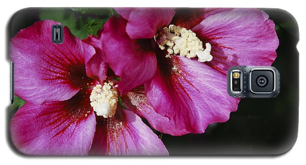 Galaxy S5 Case featuring the photograph Hibiscus Flowers by Janice Adomeit