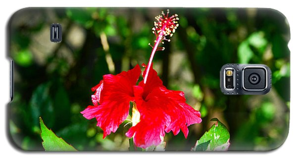 Galaxy S5 Case featuring the photograph Hibiscus by Pravine Chester