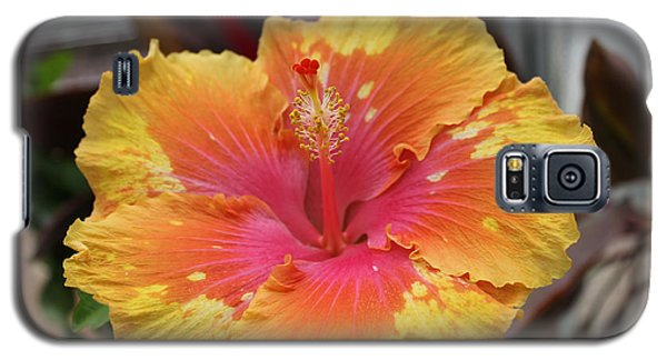 Hibiscus Yellow Galaxy S5 Case