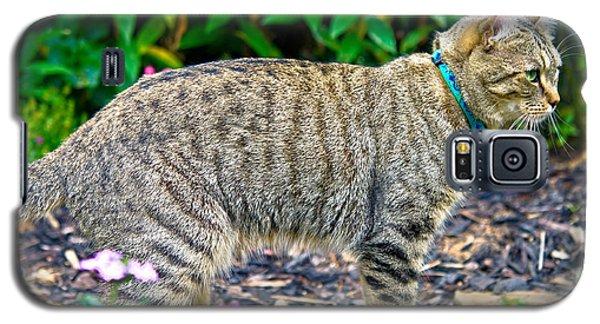 Highland Lynx Cat In Garden Galaxy S5 Case