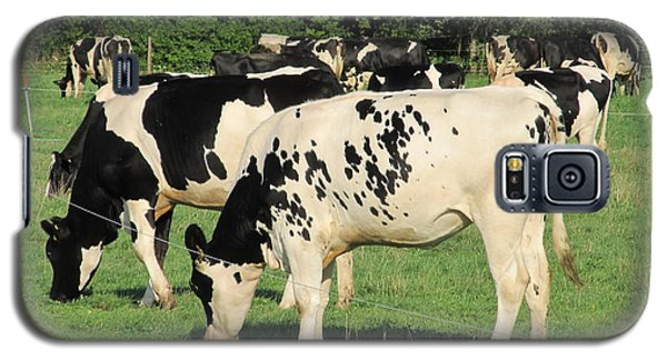 Galaxy S5 Case featuring the photograph Holsteins by Tina M Wenger