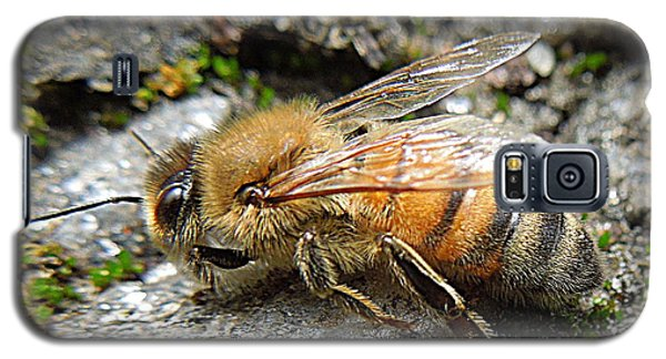 Galaxy S5 Case featuring the photograph Honey Bee On Rocks by Renee Trenholm
