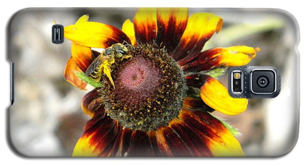 Galaxy S5 Case featuring the photograph Honey Bee On Yellow Daisy by Jodi Terracina