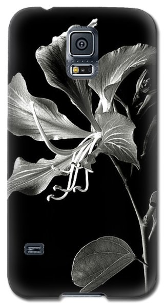 Hong Kong Orchid In Black And White Galaxy S5 Case